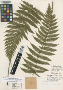 Click here to take a virtual tour of the typical herbarium specimen.